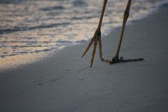 A garça-real anda ao longo da praia Foto de Stock Royalty Free