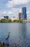 Garça-real, arranha-céus e anfiteatro de grande azul, no lago Eola Fotografia de Stock Royalty Free