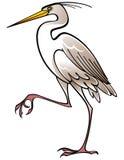 Garça-real branca do pássaro