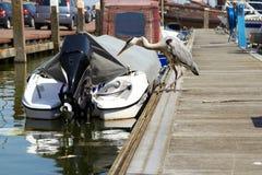 Garça-real cinzenta que procura por peixes em um cais perto do barco no porto Fotografia de Stock Royalty Free