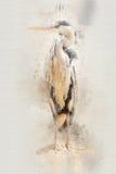 Garça-real da aquarela Fotografia de Stock