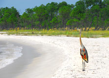 Garça-real no Seashore Imagem de Stock Royalty Free