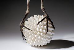 Garça-real que está em shell de uma bola Foto de Stock Royalty Free