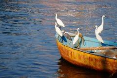 Garças-reais no barco Imagens de Stock