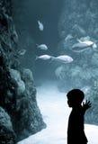 Garçon à l'aquarium photographie stock