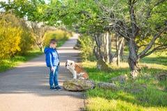 Garçon élégant beau mignon appréciant le parc coloré d'automne avec son chien anglais rouge et blanc de meilleur ami de taureau D Photo stock