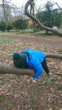 Garçon accrochant sur étreindre la branche d'arbre Photo stock