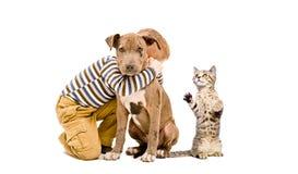 Garçon affectueux, chiot de pitbull et chaton espiègle Photo stock