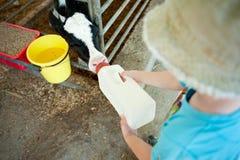 Garçon alimentant une vache image stock