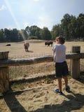 Garçon au zoo photographie stock libre de droits