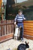 Garçon avec des lapins Photos libres de droits