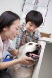 Garçon avec le chien dans le bureau du vétérinaire Photographie stock libre de droits