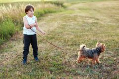 Garçon avec son animal familier Yorkshire Photos libres de droits