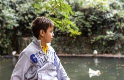 Garçon beau regardant des canards Photographie stock