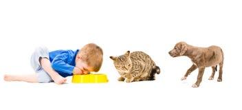 Garçon, chat et chiot communs de nourriture Image libre de droits