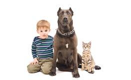 Garçon, chien et chaton de portrait Photographie stock