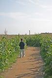 Garçon détruit dans le labyrinthe de maïs dans le domaine de maïs de Cheshire Image stock