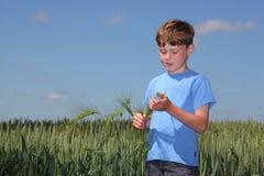 Garçon dans le champ de maïs images libres de droits