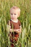 Garçon dans le domaine de blé photos libres de droits