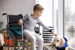 Garçon dans le fauteuil roulant avec le chien de service Image libre de droits