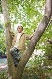 Garçon dans un arbre Image stock