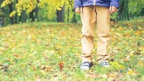 Garçon de jambes du ` s de garçon seul marchant en parc d'automne Feuilles de jaune sur la terre et les arbres images stock