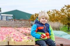 Garçon drôle d'enfant en bas âge s'asseyant sur le tracteur avec les pommes rouges images stock