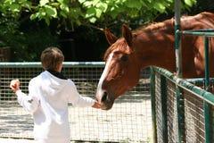 Garçon et cheval photos stock