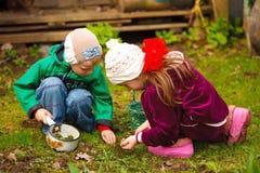 Garçon et fille recherchant des insectes et des vers de terre Image libre de droits