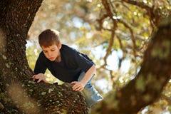 Garçon grimpant à un grand arbre Images libres de droits