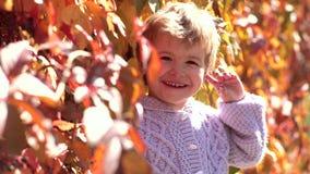 Garçon heureux d'enfant marchant dans Autumn Park Feuillage d'automne Jeu en parc d'automne Gar?on se trouvant sur des lames d'au banque de vidéos