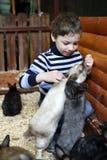 Garçon jouant avec des lapins Photographie stock libre de droits
