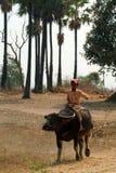 Garçon montant un buffle dans la campagne de Myanmar Image stock