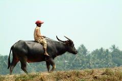 Garçon montant un buffle dans la campagne de Myanmar Photo libre de droits