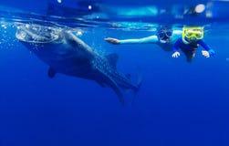 Garçon naviguant au schnorchel avec le requin de baleine Images libres de droits
