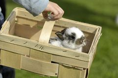 Garçon portant le lapin doux Photo stock