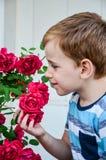 Garçon près de roses Image libre de droits