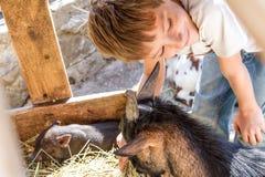 Garçon prenant soin des animaux domestiques à une ferme Photos stock