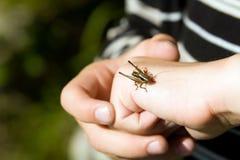 Garçon retenant un cricket Photographie stock libre de droits