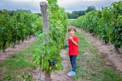 Garçon riant mignon, courant dans une belle cour de vigne d'été Photo stock
