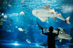 Garçon sérieux regardant dans l'aquarium avec les poissons tropicaux photos libres de droits