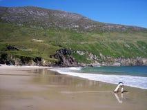 Garçon sur la plage principale d'Achill Photos libres de droits