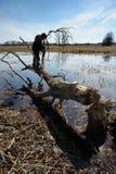 Garçon sur un arbre, castors tombés Images libres de droits