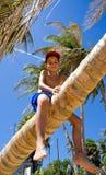 Garçon sur un palmier Photographie stock