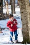 Garçon tapant un arbre d'érable Photos libres de droits