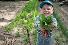 Garçon tenant un groupe de radis Photos libres de droits