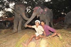 Garçons et éléphants Image stock