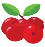 Garść cranberries Zdjęcie Stock