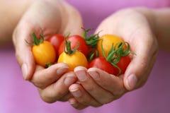 garść pomidory Obraz Royalty Free
