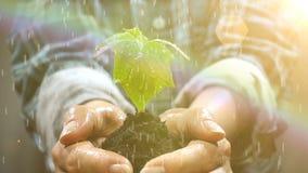Garść ziemia z Młodej rośliny dorośnięciem Pojęcie i symbol przyrost, opieka, trwałość, ochrania ziemię zbiory wideo